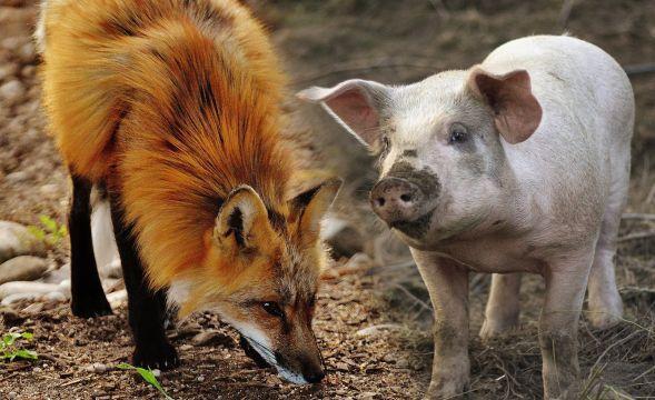Vom Sparfuchs zum Trüffelschwein
